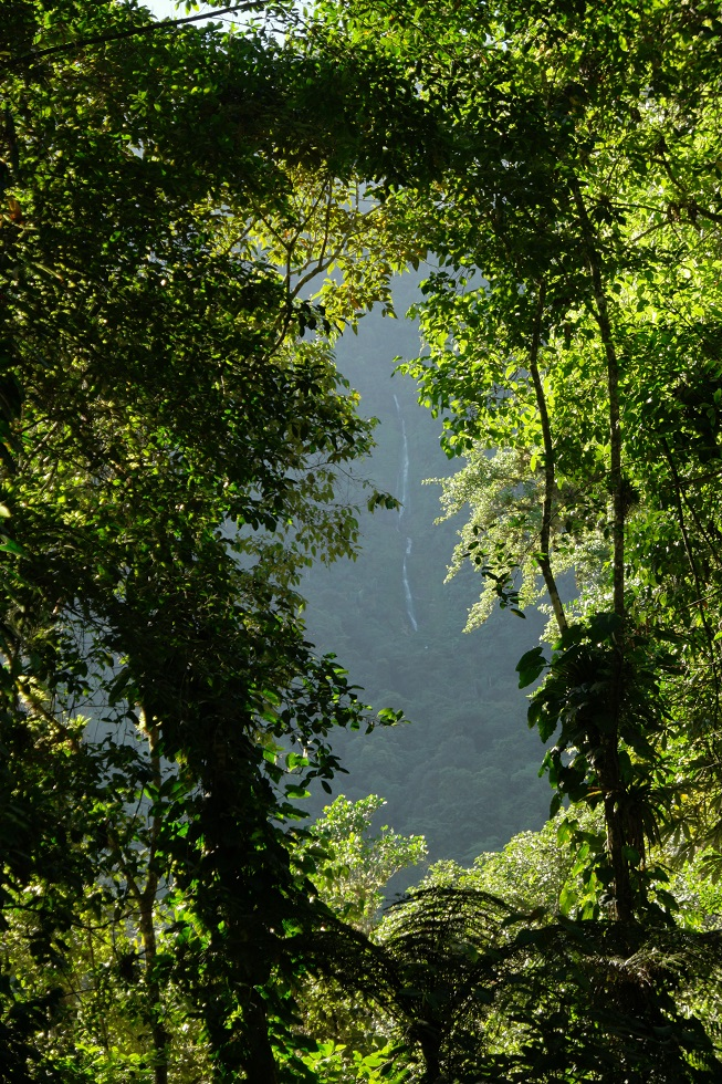 Jungle Ciudad Perdida