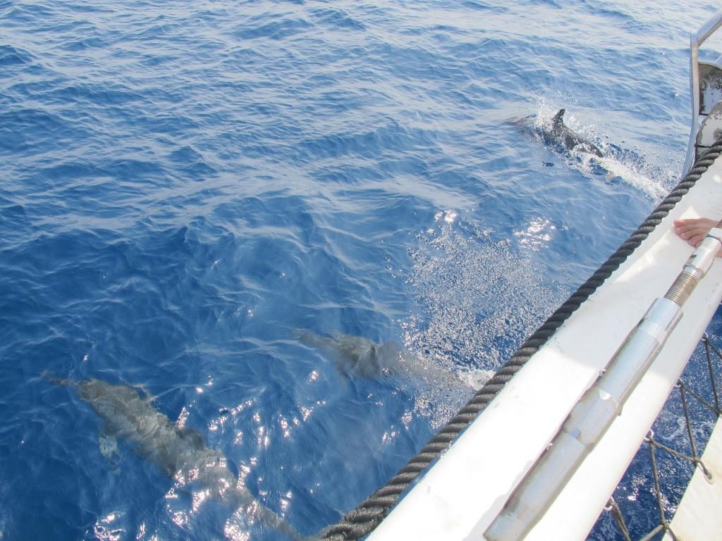 Dolfijnen San Blas