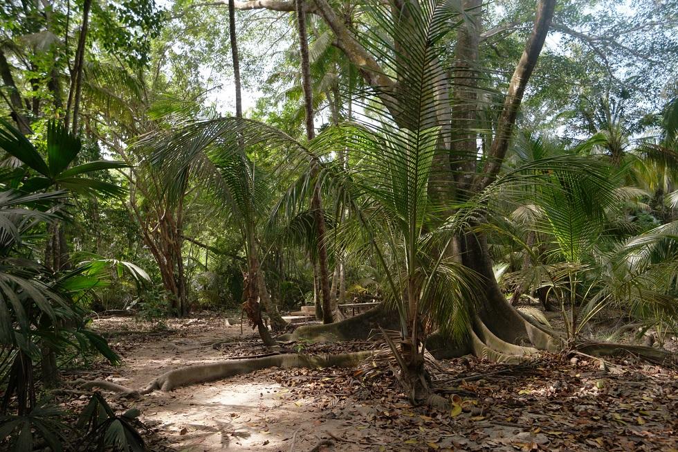 Lopen Tayrona nationaal park