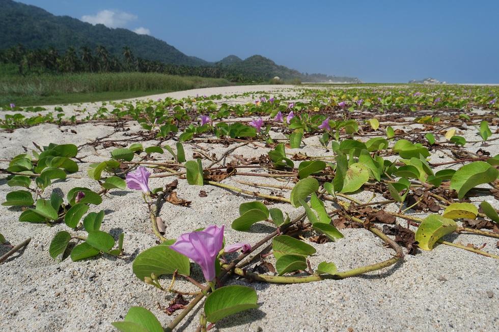 Strand tayrona nationaal park