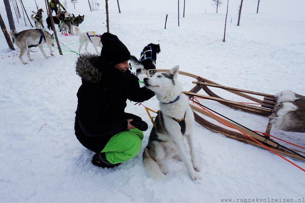 Huskey tocht in Zweden