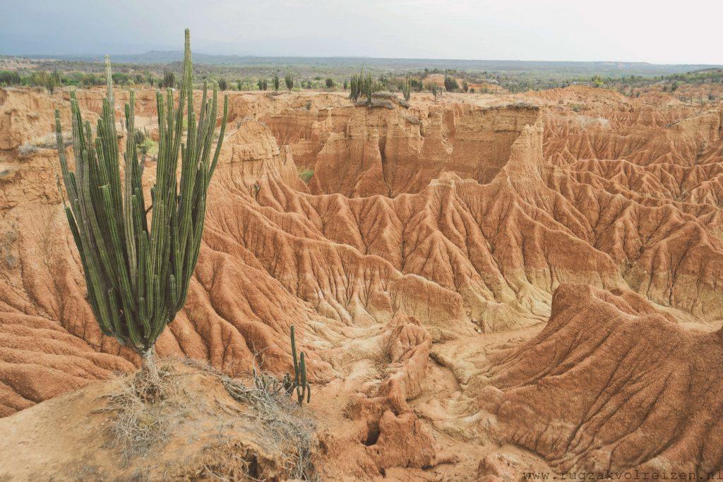 Tatacoa woestijn cactus