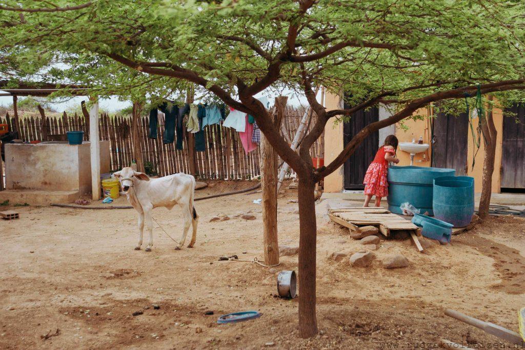Tatacoa woestijn bewoners