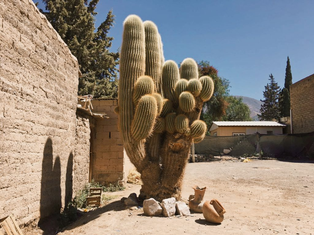 Cactus - Trowback april